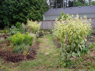 Great Symphytums with weeds | by RHR Horticulture