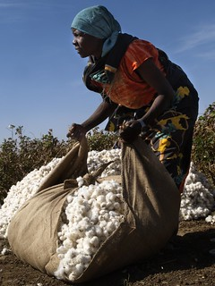 Cotton harvest | by World Bank Photo Collection