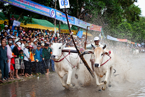Khmer Cow Racing Festival | by Quinn Ryan Mattingly