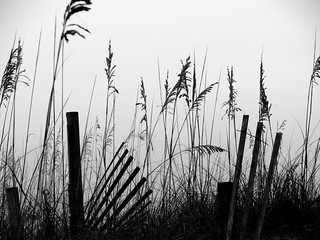 sea oats | by emily takes pictures