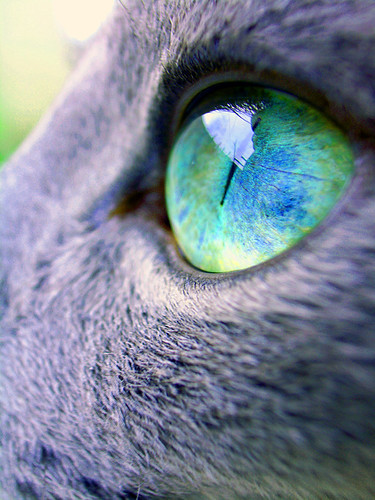 "Russian Blue eye ""good morning,today's sky"" 