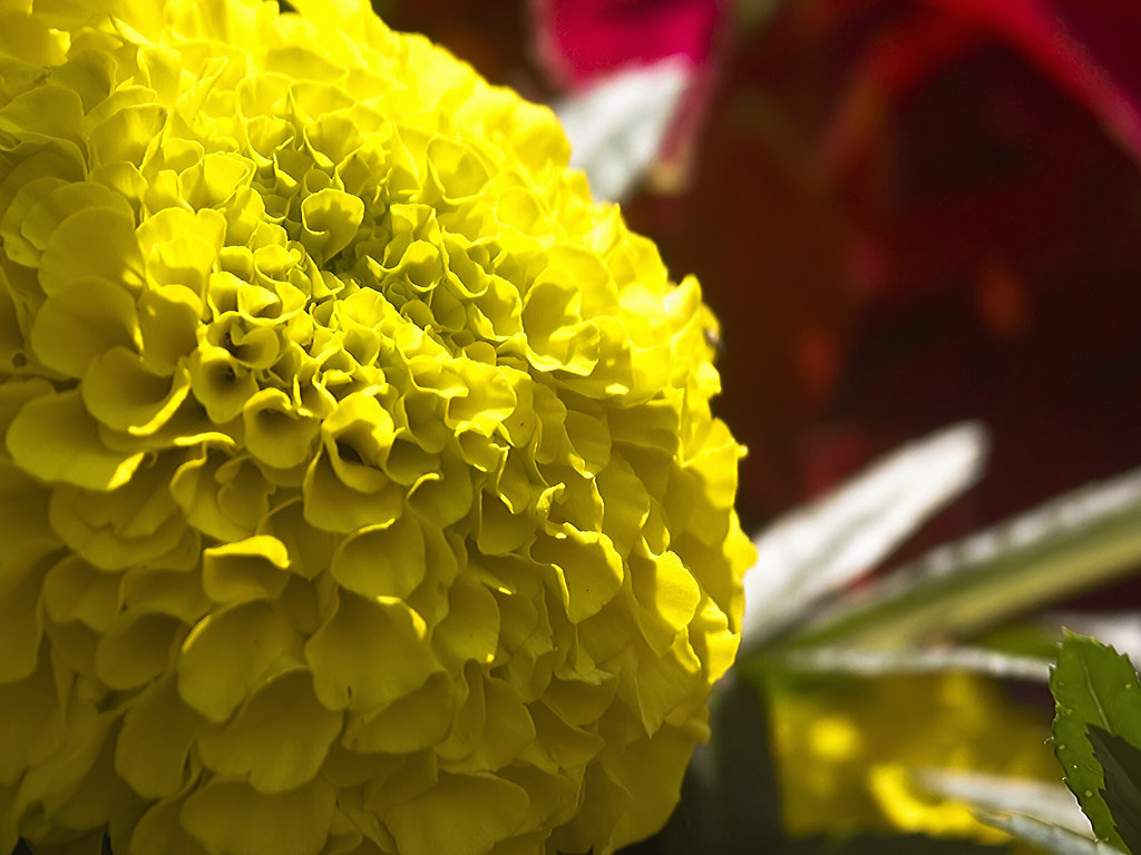 Bright Yellow Ball Flower Thing With Lots Of Curves And Li Flickr
