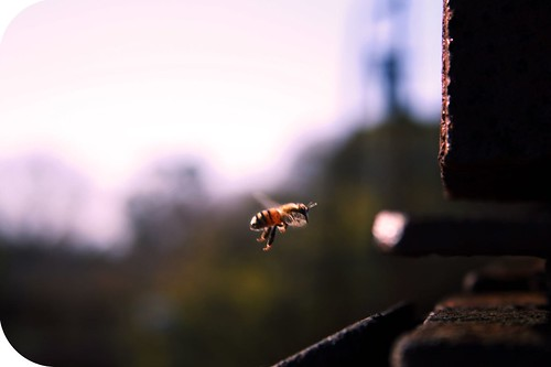 Aeropuerto Bee | by photographer padawan *(xava du)
