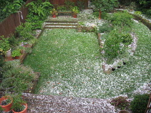 After the hailstorm | by tmoertel