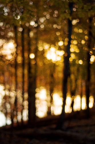 bokeh trees | by SurprisePally