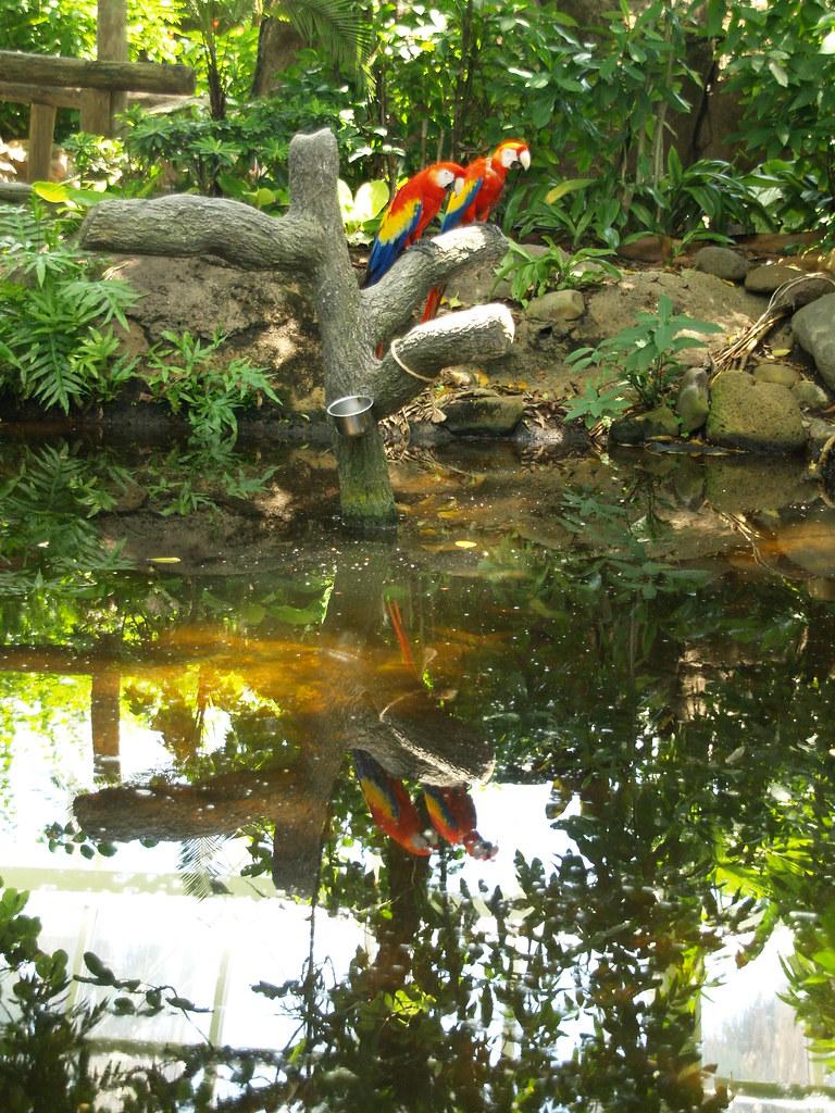 Galveston Texas Moody Gardens Rain forest Pyramid 2010 spe… | Flickr