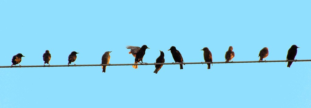 Birds On A Wire Looks Like That Middle One Is Getting Heck