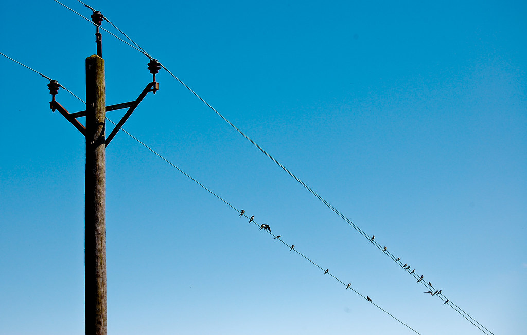 Telephone Wire Perch | Birds adorn the telephone wires on a … | Flickr