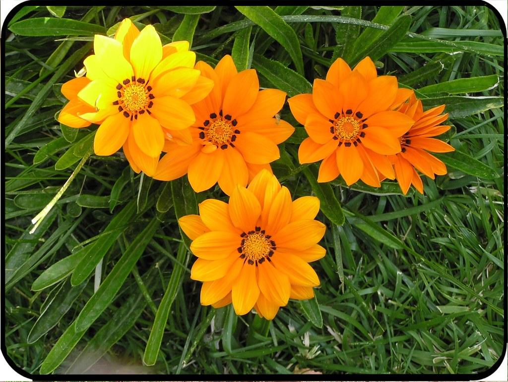 Giardini fioriti immagine progetto giardino con aiuole for Piccoli giardini fioriti