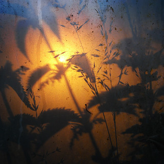nettles & grass solstice sunset | by the incredible how (intermitten.t)
