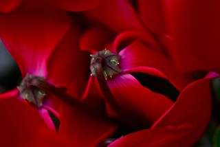 ° magic red° | by bridgy2008