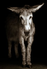 The Prettiest Donkey On Earth | by firda