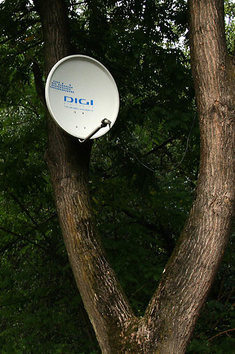 a tree with digital television :) | by pgpdesign (paul)