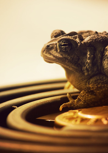 The Further Adventures of Mr. Toad | by rc.photo