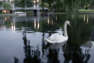 swan in the garden | by ritingon