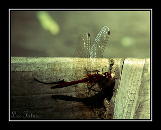 Stained-Glass Wings | by Leefotos