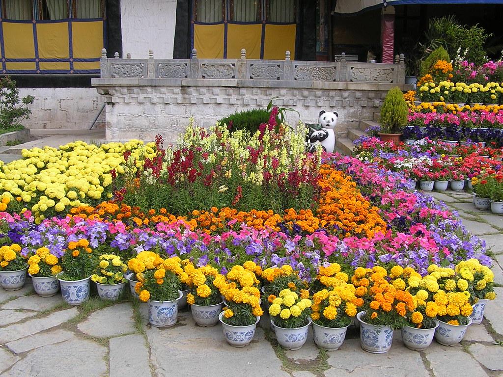 Image De Parterre De Fleurs 967 - parterre de fleurs devant le palais norbulingka | flickr