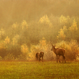 Deer In The Rain | by saxman1597