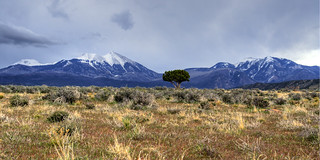 Lone Tree against the La Salles Edit | by Scott Ingram Photography