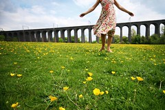 246/365 Buttercups and Viaducts | by sosij