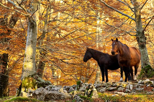 Wild Horse | by wildfox76