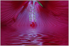 Red flower with flood | by frankeys creation