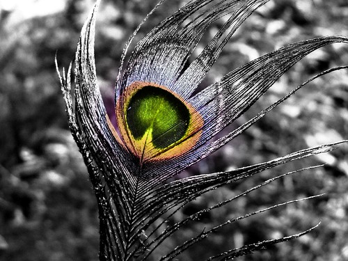 P1010063 - grayscale with coloured nucleus | by amit_gupta