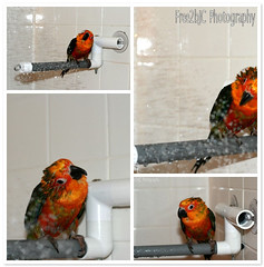 Pasha Shower Time | by Free2bJ.C.♡Photos