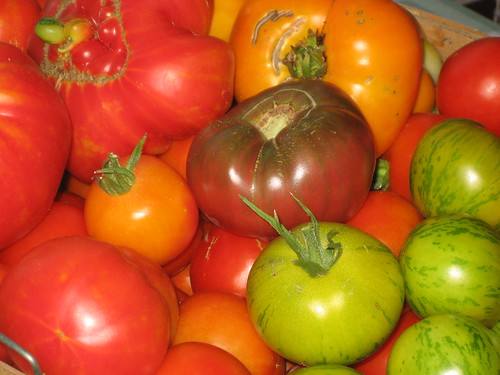 ripe ready to can tomatoes | by celticjig1