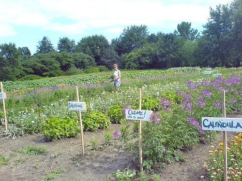 floral diversity in organic and modern farming Organic farming methods combine scientific knowledge and modern  21, 2016  — plant diversity in intercropping leads to more diversity below ground too.