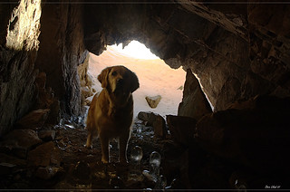 Golden retriever in a golden cave | by steinliland