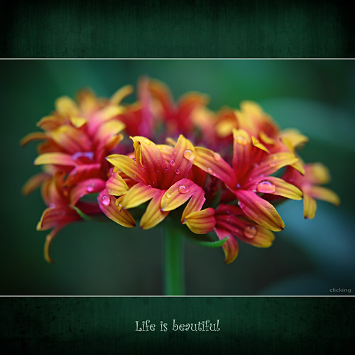Life is beautiful | by -clicking-