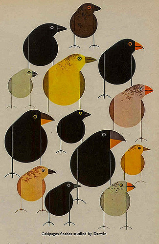 """Galapagos finches studied by Darwin,"" Charley Harper 