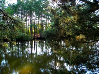Assawoman Canal | by Lee Cannon