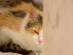 Novogorodská mačka/Favorite Flickr Topic