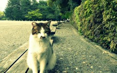 Strays in Kyoto | by naromeel