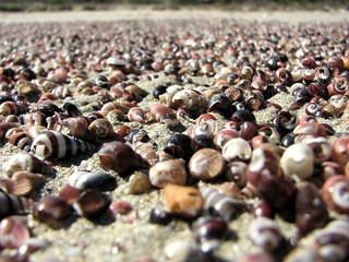Shells on Bherwerre beach | by Andrea Schaffer