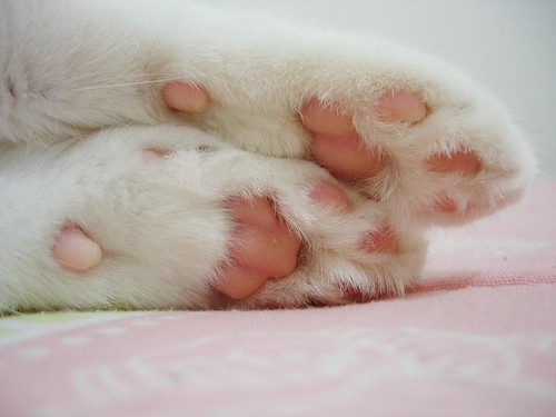 I love these pink paws! | by Kitty & Kal-El