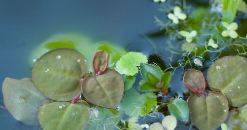 Pond Plants | by LollyKnit