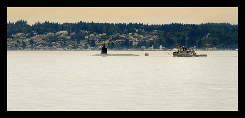 surfacing in the Puget Sound | by ssmetters