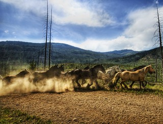 Stampede of the Wild Horses | by Stuck in Customs