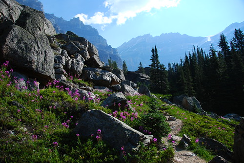 Lake O'Hara Flowers | by aribix