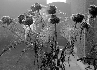 cobwebs | by markcork40
