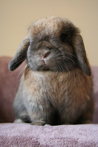 Flopsy Bunny :) | by Mark Philpott
