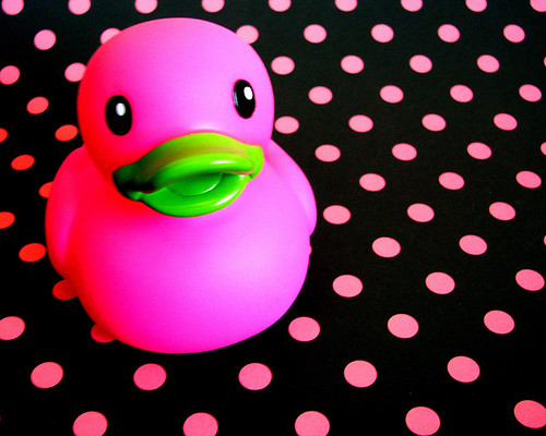 Disco Duck | by Sofia Katariina