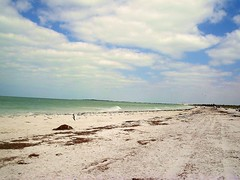 Caladesi Island Beach Fl