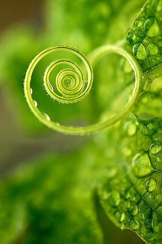 A green heart for you !! have a sweet and nice weekend. | by Matthew Fang