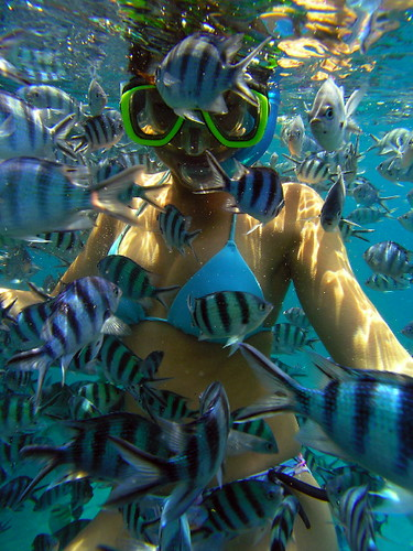 Snorkel Girl And School Of Fish
