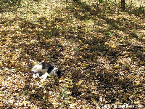 Sacked Out Smudge 2 | by Farmgirl Susan