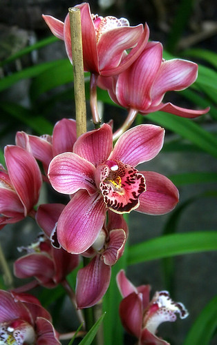 Orchids | by aussiegall
